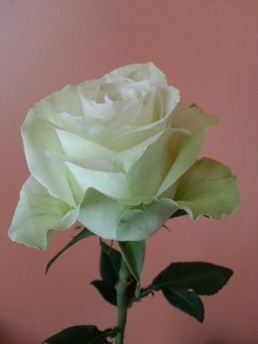 Rose! Because treat yo' self. Plus, it's light green. Kewl!