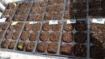 Baby plantlings!